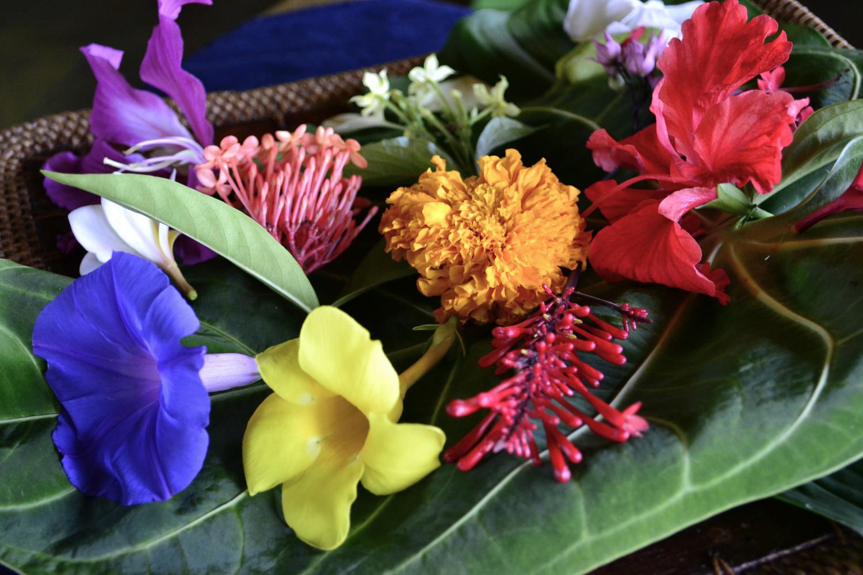 Flowers of life robbi zeck izmirmasajfo